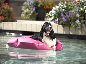 GLDPP-M - Poochie Pool and Deck Lounger Medium - GLDPP-M